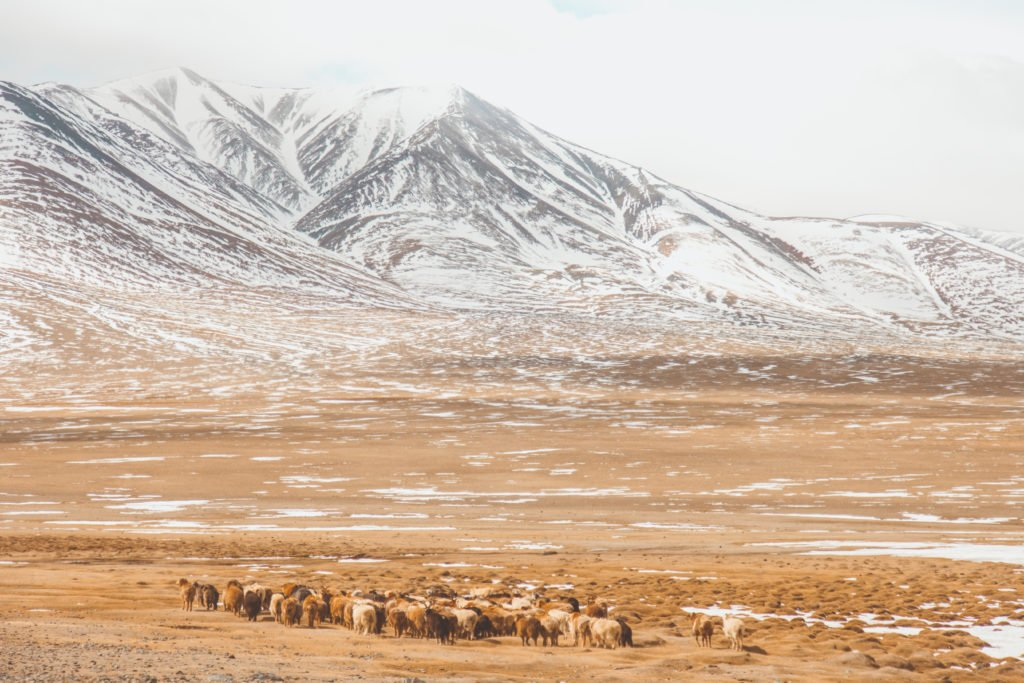 travel photography mongolia gallery